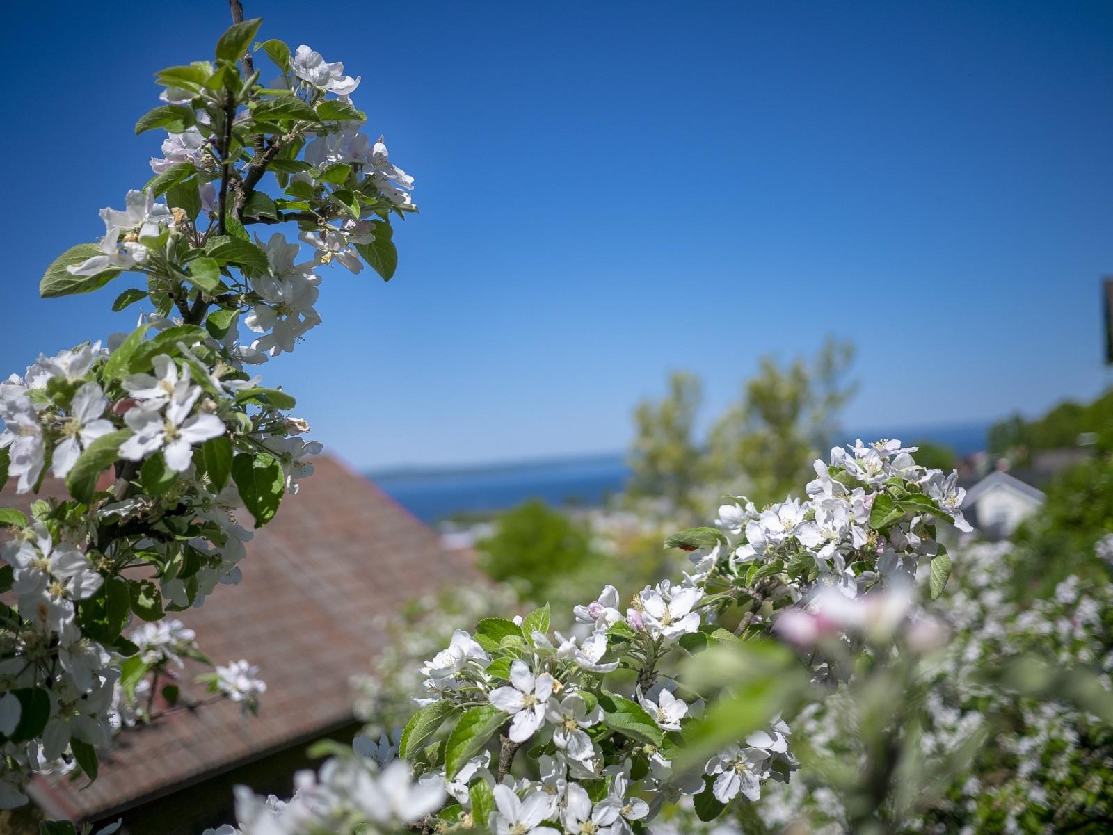 Trädgård..